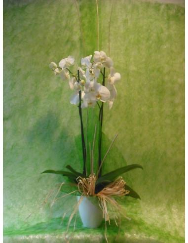 Orquídea con base de cerámica