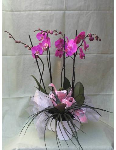 Centro de Orquídeas y Tillansia