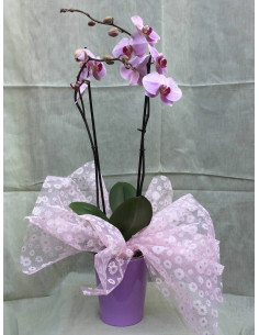 Orquídea rosa