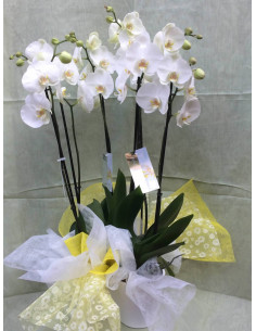 Centro de 3 orquídeas