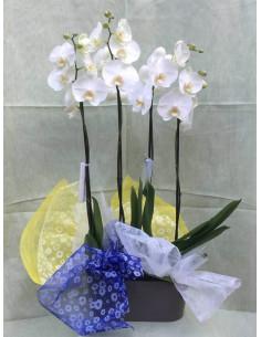 Centro de 2 orquídeas