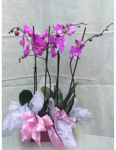 Centro de 2 orquídeas rosas