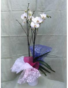 Orquídea gigante con base de cerámica