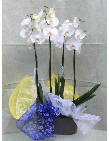 Centro de Orquídeas con base de plástico