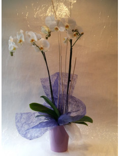 Orquídea blanca con base de plástico